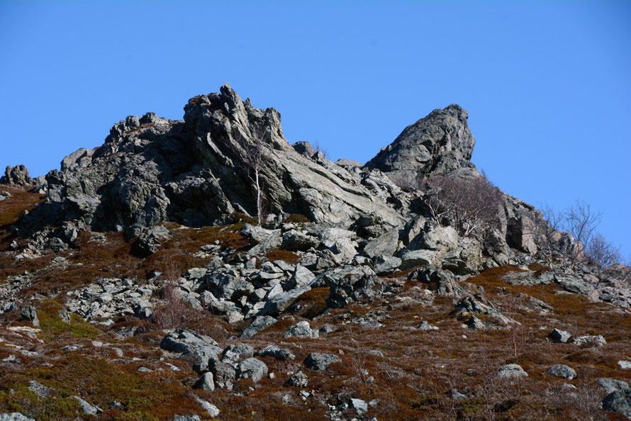 Gabbro outcrop with strange ripped, fluted and layered forms with the characteristic greenish/olivine hue of gabbro at the northern end of the Lyngen peninsula with characteristic crowberry and stunted silver/downy birch.