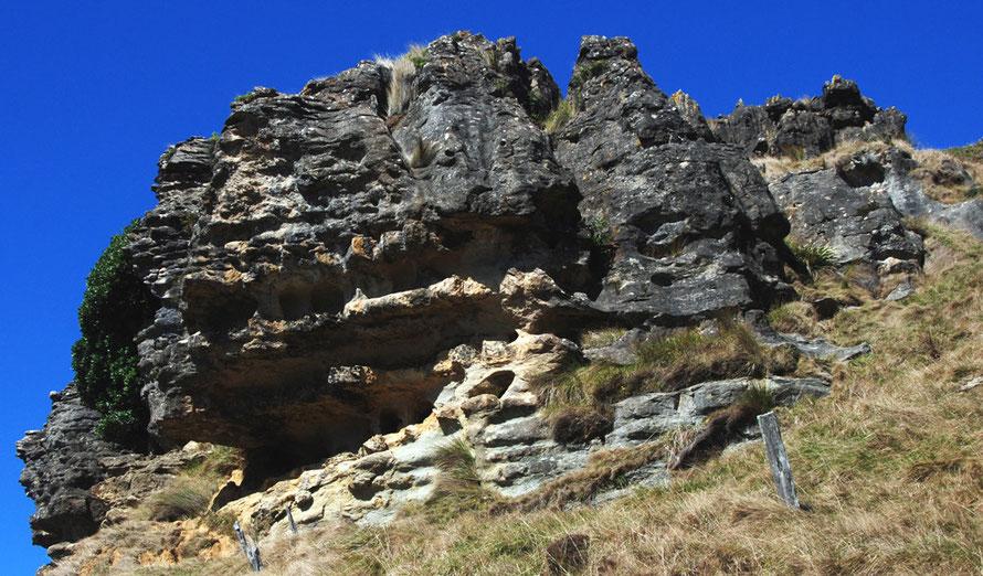 Gnarled limestone bluff above the Paturau River