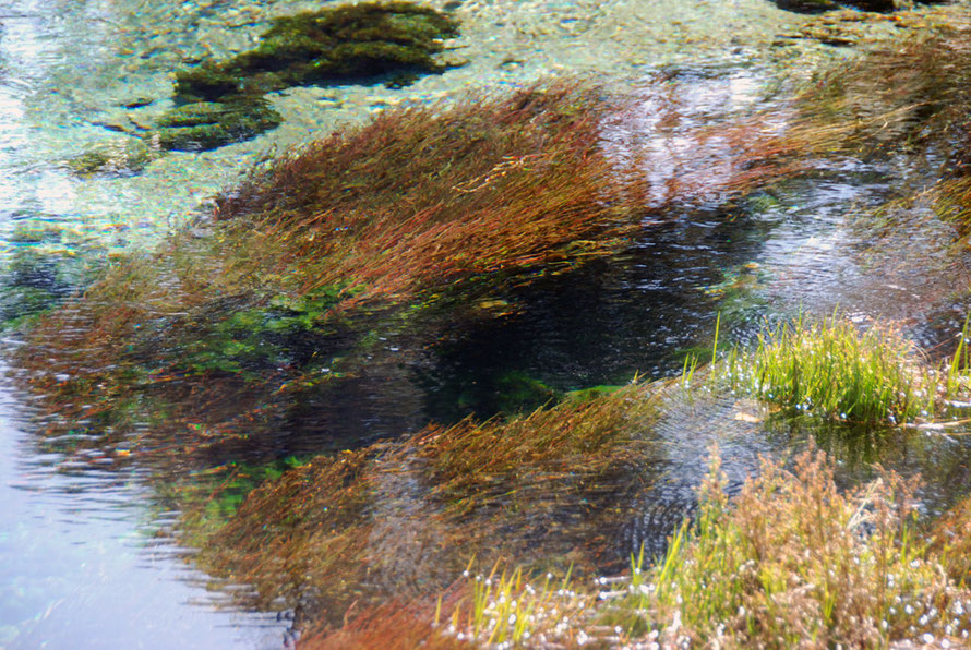 Macrophytes at the Main Spring at Te Waikoropupu Springs, Golden Bay.