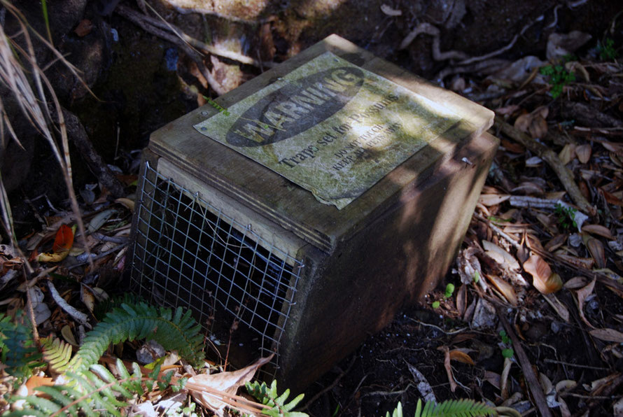 Possum Trap at Whatipu.