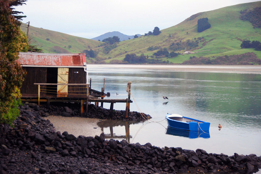 The humble rural idyll: boathouse and boat on the Papanui Inlet, Otago Peninsula