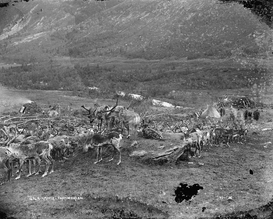 Sami summer camp at Tromsdalen in 1926. (Nat Lib of Norway Wikimedia Commons). Tromsdalen is the mainland valley opposite Tromsøysund Bridge.