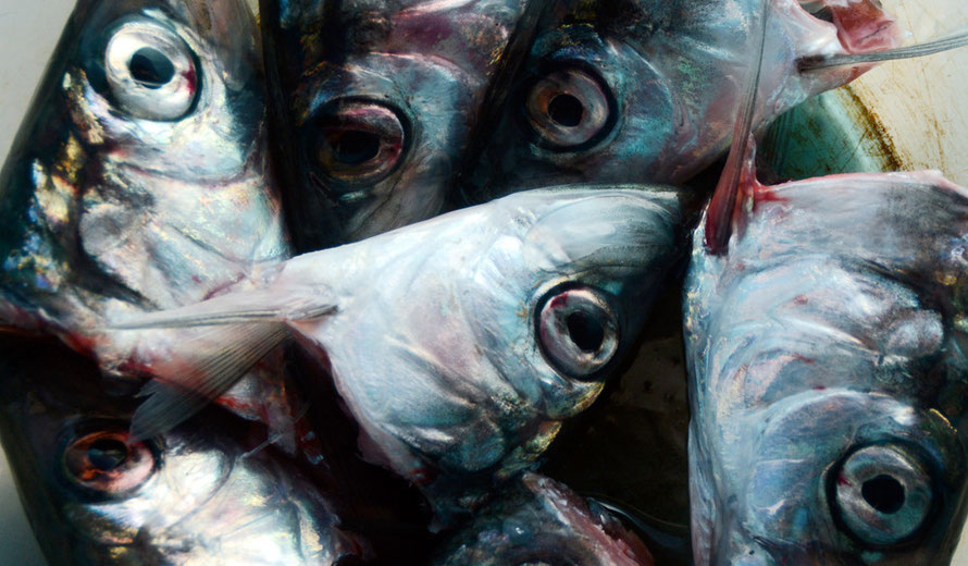 The Blip: Herring heads.