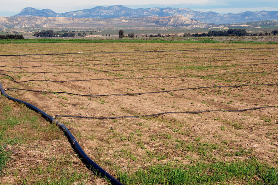 In the Buffer Zone below Peristerona looking across irrigated fields to the Kyrenian Hills in the TRNC