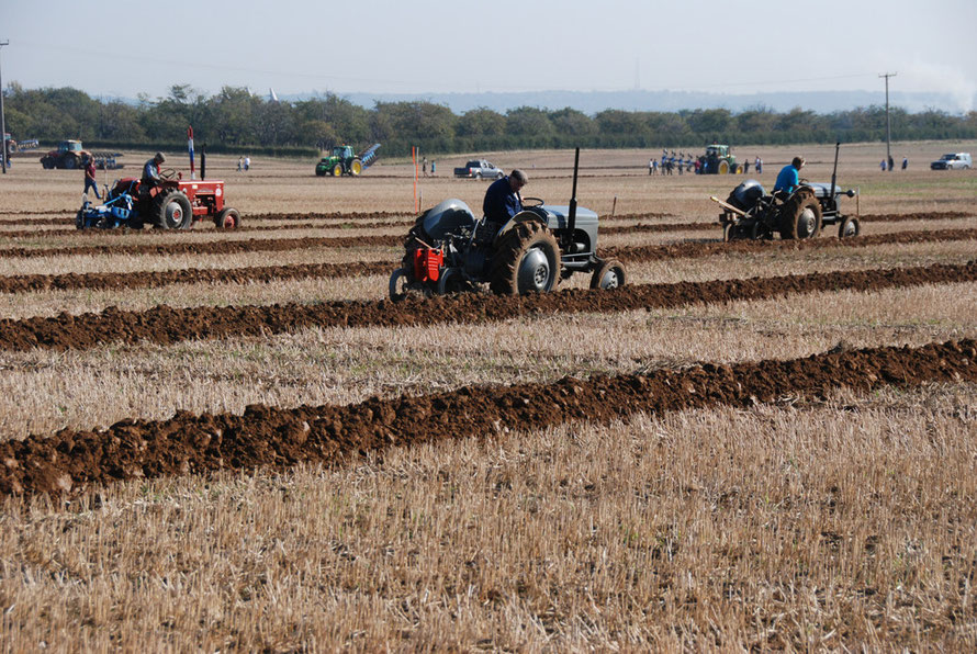 The 2011 East Kent Ploughing Match at Lees Court Estate near Faversham: the vintage tractors battle it out