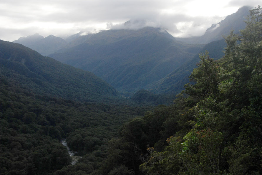 Looking north-east up the Hollyford River to the Humboldt Mountains from Pop's Lookout on the Milford Road. Pop Andrew's the road supervisor was killed by an avalanche in 1983.