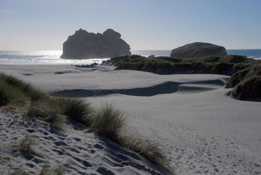 The fine wind blown sands of Wharariki Beach and the distant Archway Islands. The endemic coastal sedge pingao - Ficinia spiralis - has long since been supplanted by Marram Grass - Ammophila.