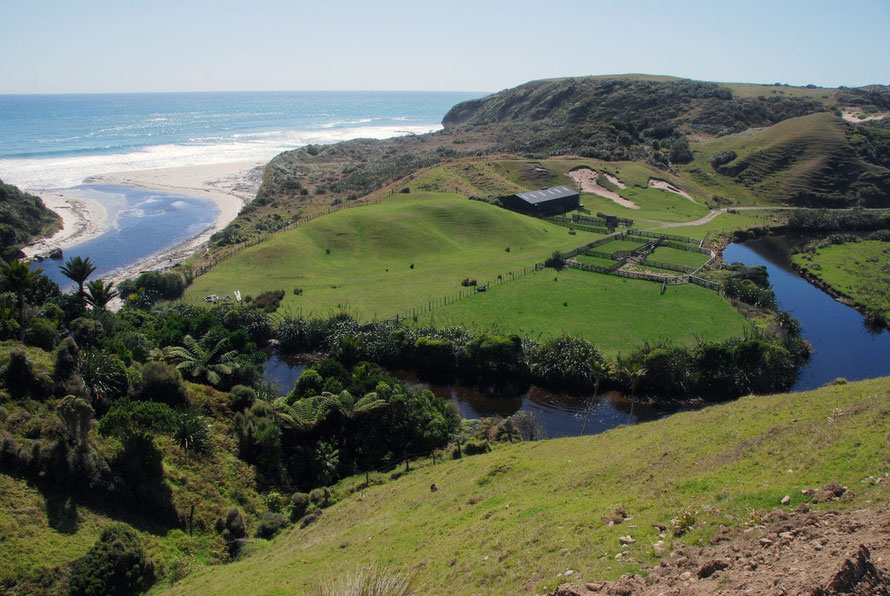 Vigorous bush clearance prepared 51% of New Zealand's land for exotic grasses. Paddock and sheds on the West Coast at the Otuhie River west of Collingwood, Tasman.