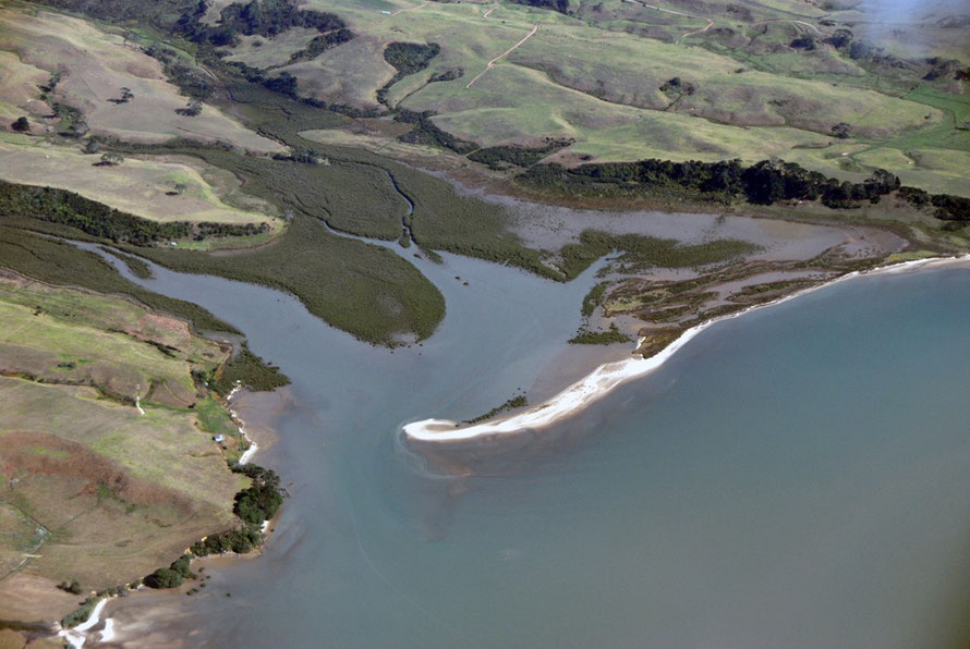 Mangroves and sand spit at Rangariri Creek in the Manukau Harbour