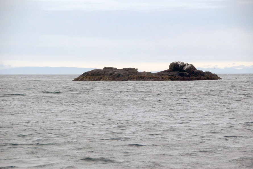 Fish Rock, Foveaux Strait. The shoaling waters of the Polybank Shoal are just visible beyond the rock.