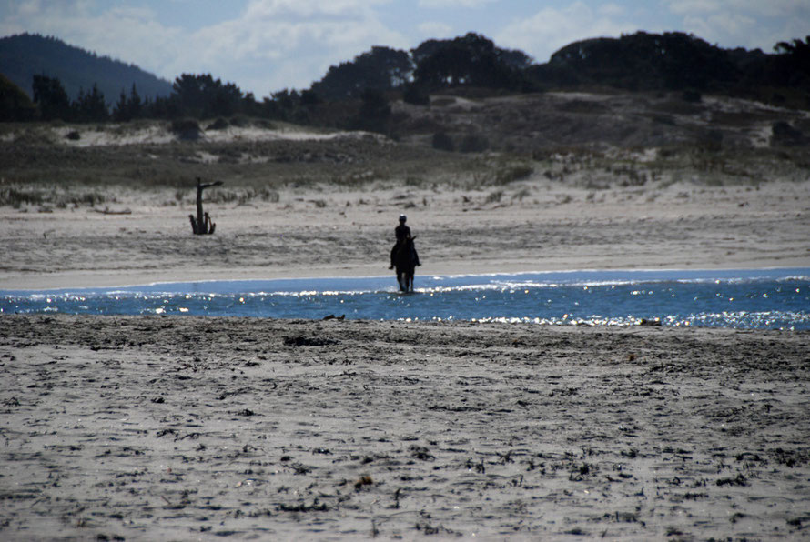 Lone rider crossing the Pakiri river mouth on Pakiri beach.