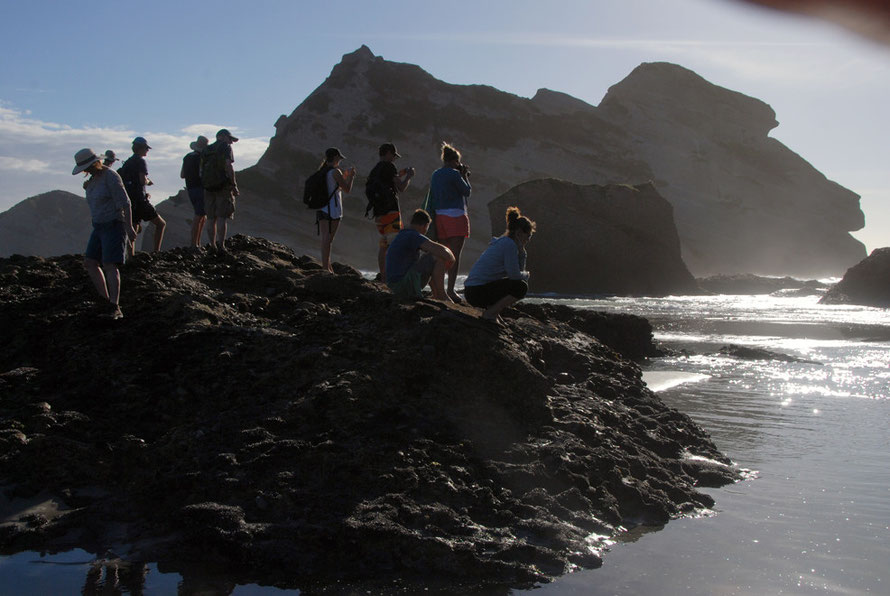 The fur seal pup watchers: Wharariki Beach west of Golden Bay.