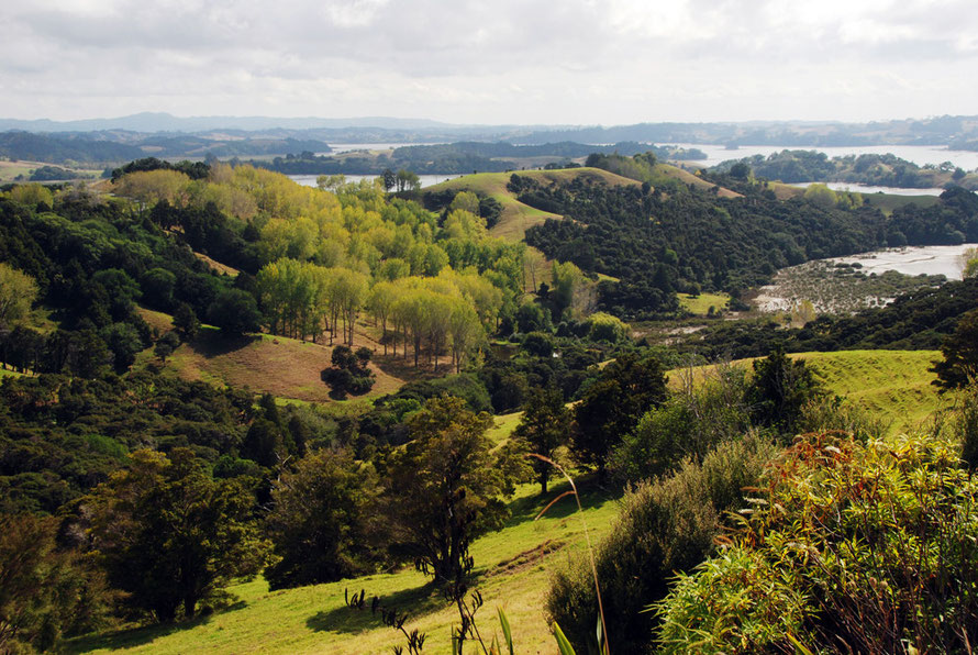 The native biota gone to make way for an arcadia of grassland and exotic woddlands near Mahurangi, Auckland.