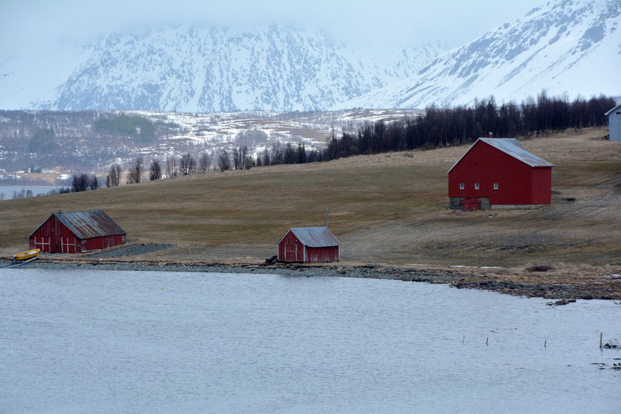 Hayfield, barn and fish sheds on the northern side of the Sørfjorden fentrance and sheltered from the wind with the northern Lyngen Alps in the distance.