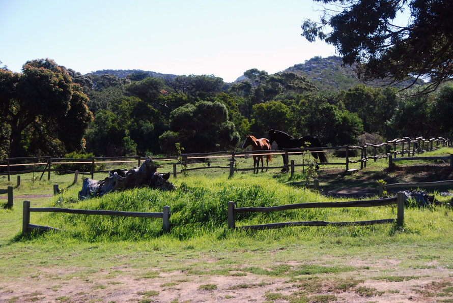 Horses in the paddock at the old Wildskutbrand Farm at the Cape Farmhouse Restaurant