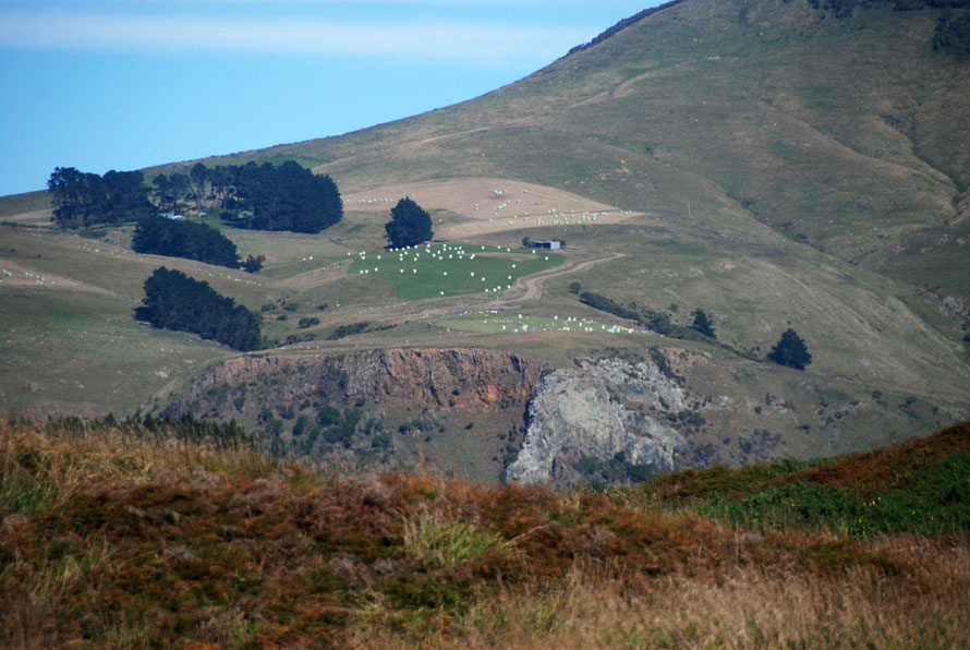 McKay Road farm on the shoulder of Mt Charles (408m) on the Otago Peninsula