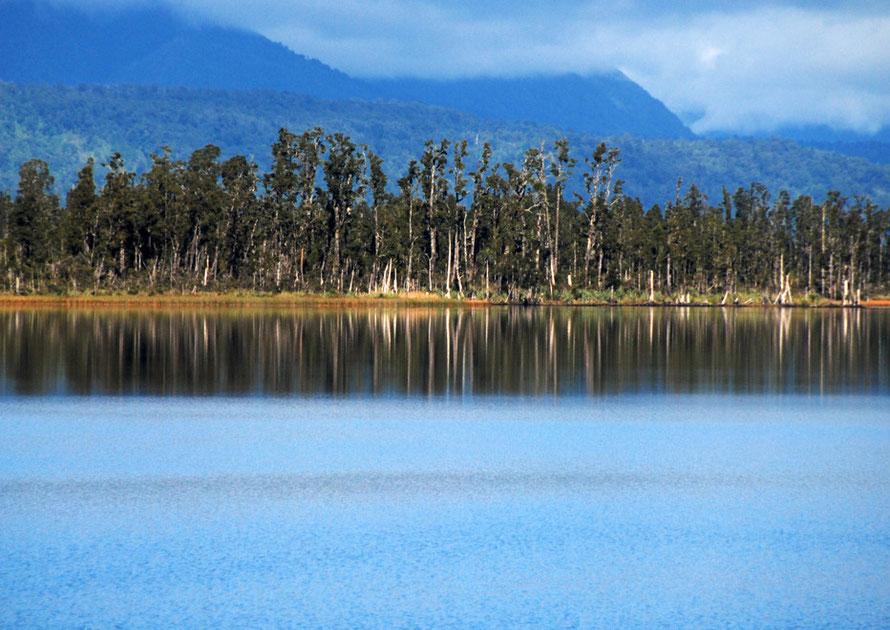Lake Ianthe/Matahi Kahikatea  forest between Franz Josef Glacier and Hokitika