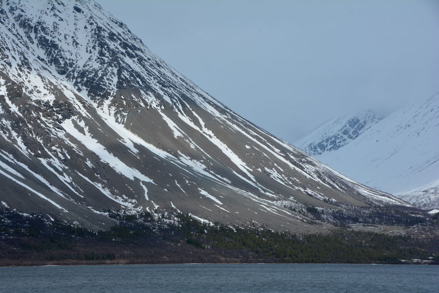 The massive scree slopes (lateral moraines?) at the eastern end of Sultinden (1080m) seen from Jovik across the deeply glaciated Kjosen inlet. (Note trees and telegraph poles for scale.)