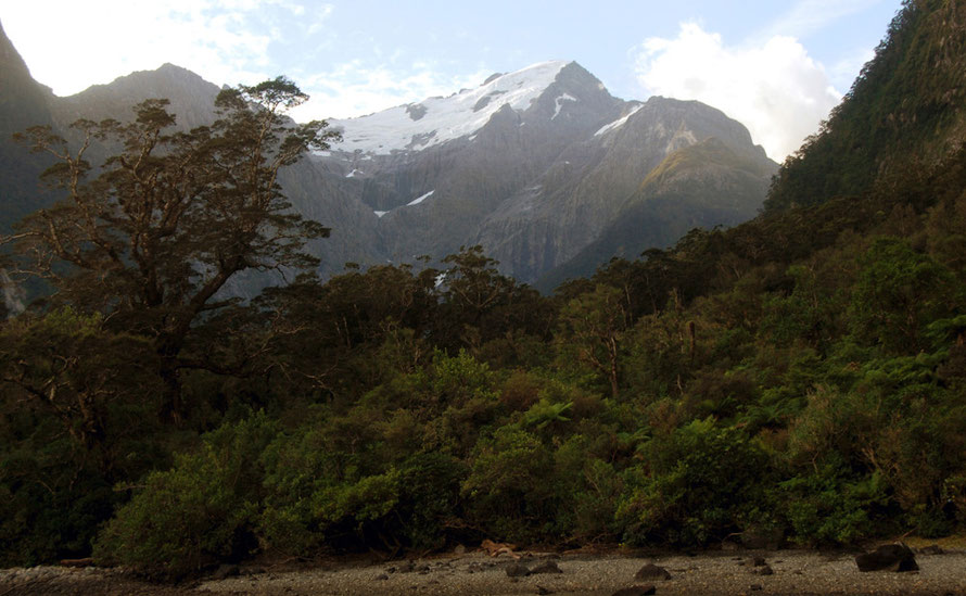 Mt Pembroke in evening light with the lush temperate rain forest growth of Harrison Cove in the foreground.