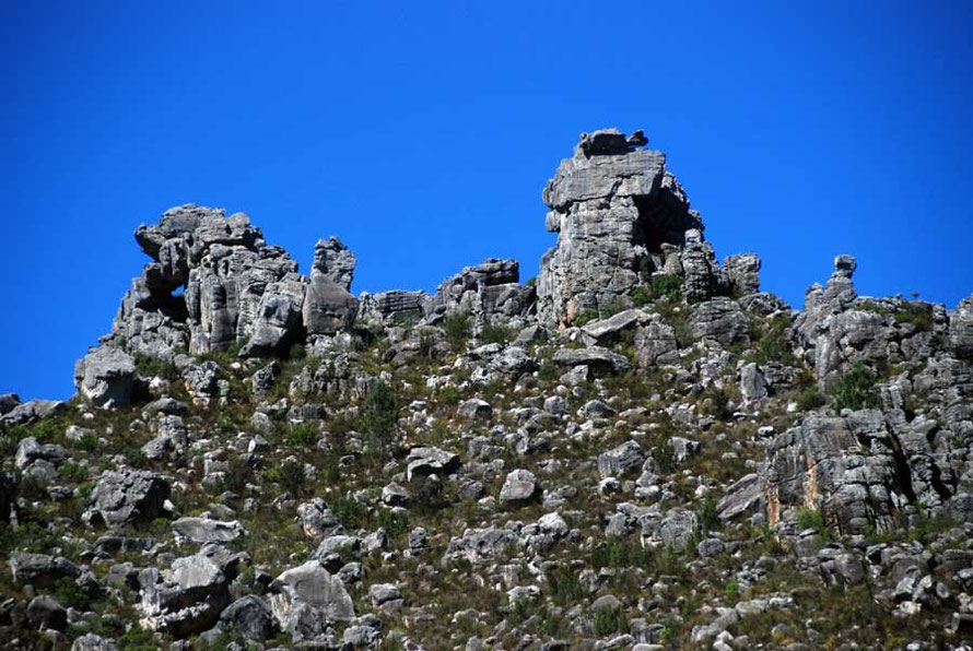 Weathered quartzitic sandstones of the Cape Fold Belt above Bain's Kloof