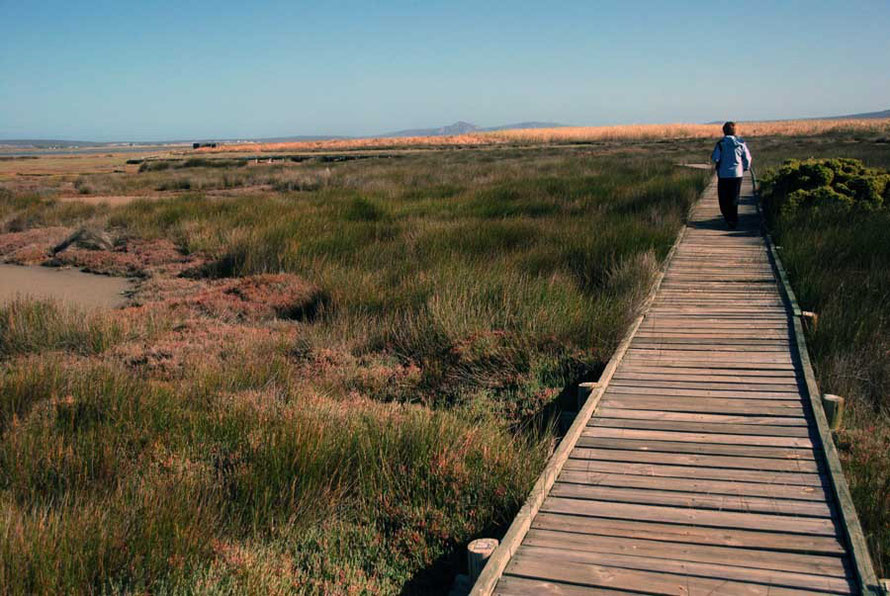 The spectacular boardwalk out to the hide to the east of the Geelbek Visitor's Centre (hide is at top left corner) West Coast National Park