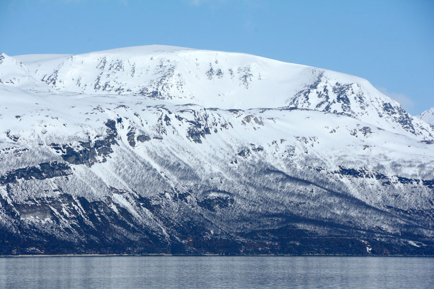 The tree line for Downy Birch at about 300m here with the peak Stortuva at 2000m on the east facing slope of the Ullsfjorden near the Svensby ferry crossing in subarctic Norway.