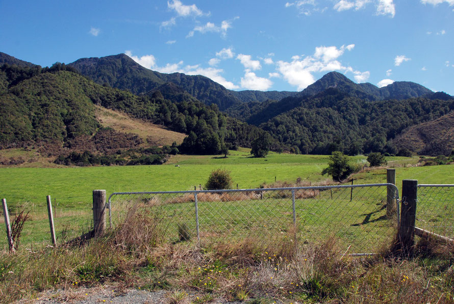 The dazzling greensward of the Buller valley near Murchison