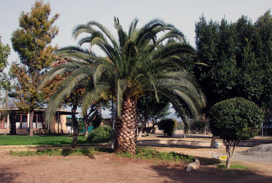 Park near Chrysaliniotissa, Nicosia