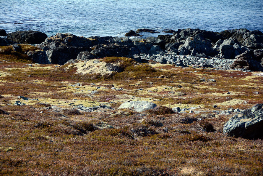Lichen and Crowberry covering the rocky westerly foreshore at Russlev on the Lyngen Peninsula.