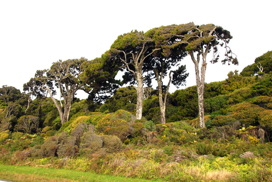 The rain forest edge north of Haast near the Waita River