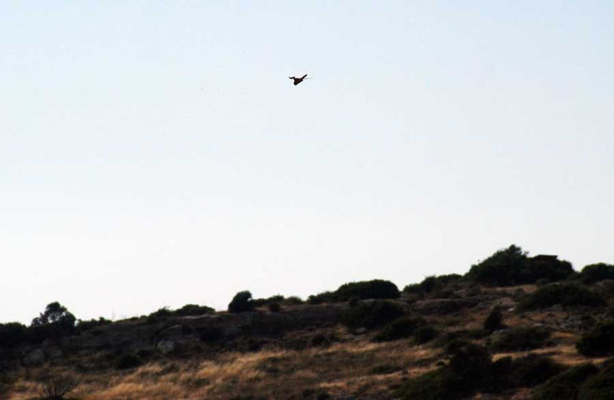 A kestrel hunts on the updraughts at Kourion, a favourite launching point for Cypriot paragliders