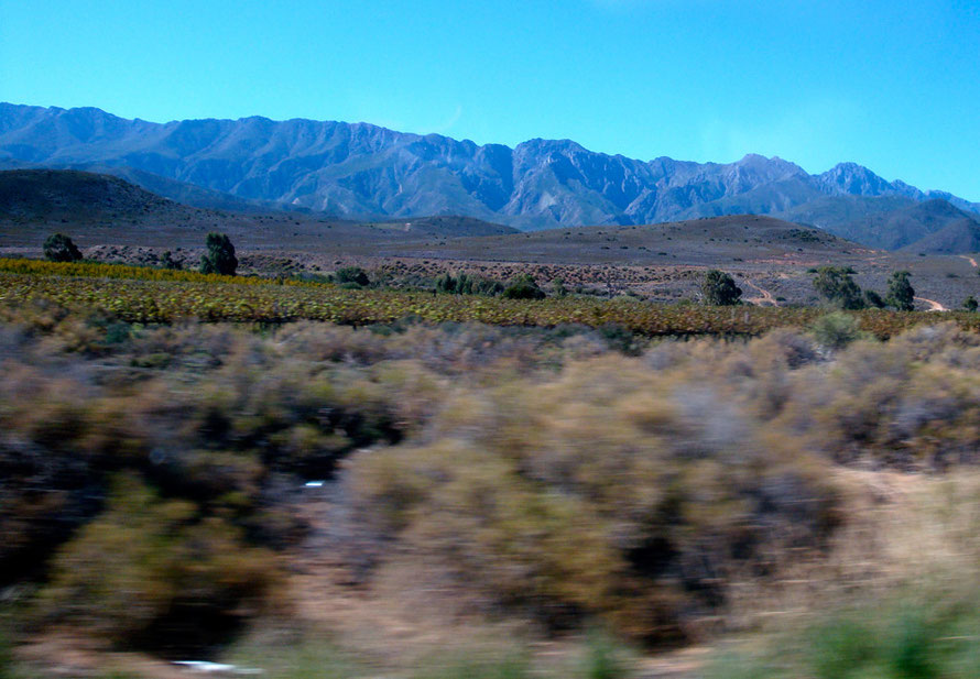 Winelands between Worcester and Robinson on the edge of the Breede River Valley (c) Peg Murray Evans