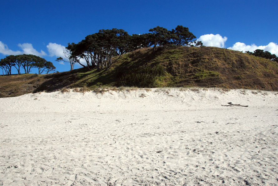 Sand, dunes and pohutukawa at the south end of Pakiri beach.