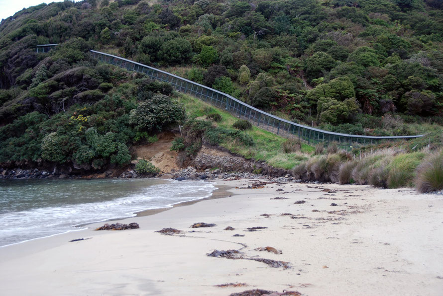The predator-proof Xcluder fence at the Dancing Start Foundation Ecologicla Preserve at Lee Bay on Stewart Island. The DSA is based in California and was created by the late Sue Stiles in 1993.