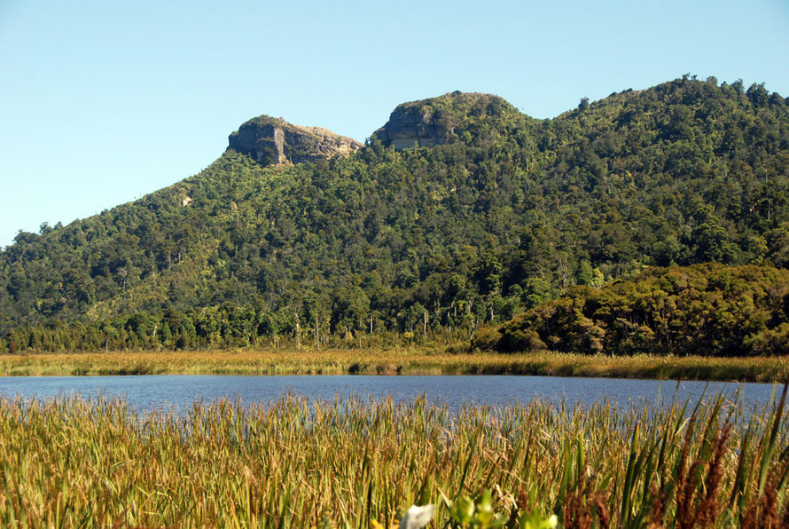 Reedbeds, open water and kahikatea forest and limestone bluffs to the west from Snake Creek Road at Mangarakau Swamp