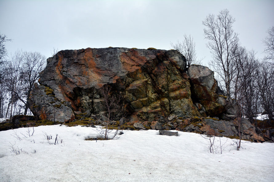 A huge Gabbro erratic near Kobbesteinan on the road to Jøvik. It has been much shattered and there are stong vertical faults and bedding plains present.  Note also the rust markings. This may have been brought down from the nearby Jiehkkevárrii massif.