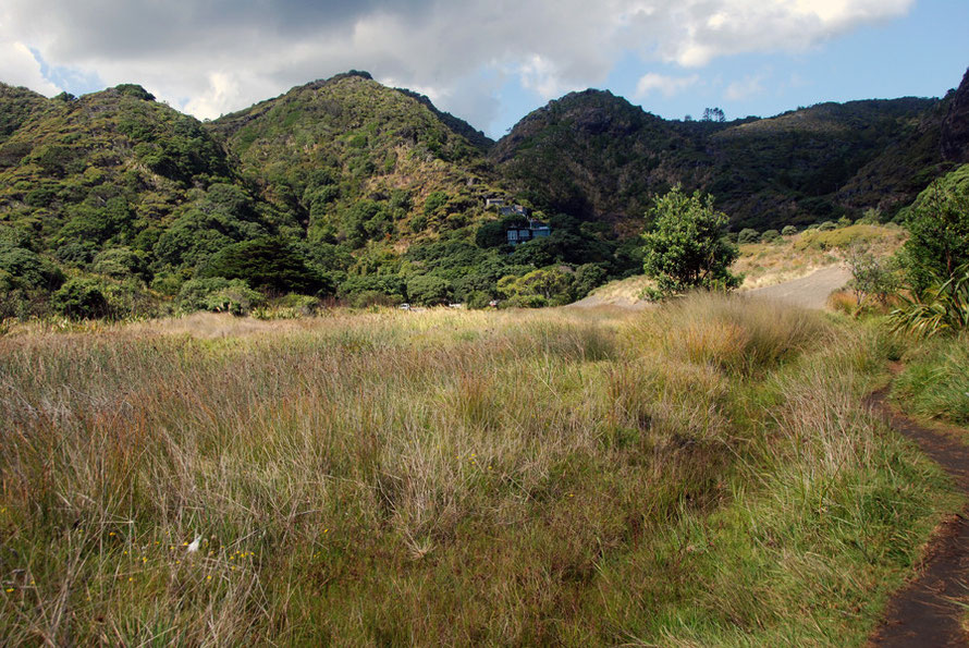 The rugged hills of the Waitakere Ranges that come down to the coast at Karakere.
