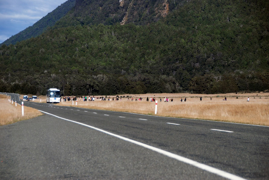 Four coaches and a minibus disgorge their passsengers to experience the wilderness at Knobs Flat on the Milford Road. 65% of the 450,000 annual visitors to Milford arrive by coach most travelling down
