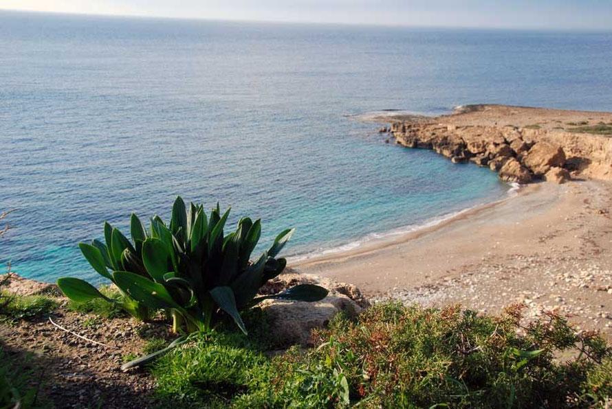 Tulips, beach, sea: Akamas Peninsula