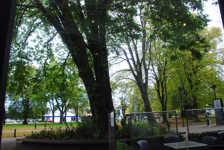 Shady Trees in the Museum Reserve outside the excellent Otago Museum