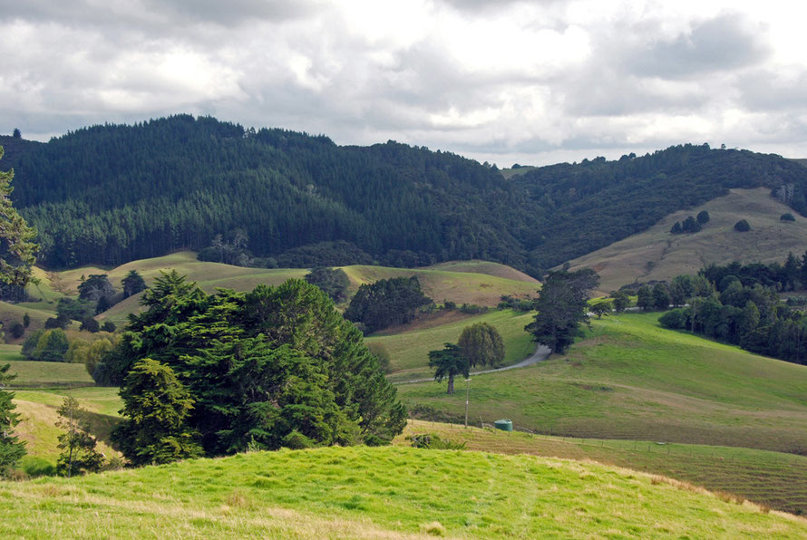 Verdant rolling country coming back to green after high summer near Mahurangi, Auckland.
