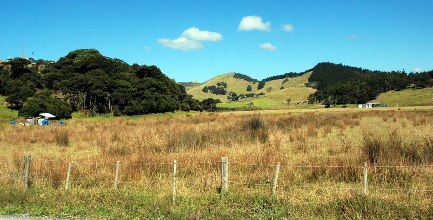 More rural: on the Wellsford to Pakiri road.
