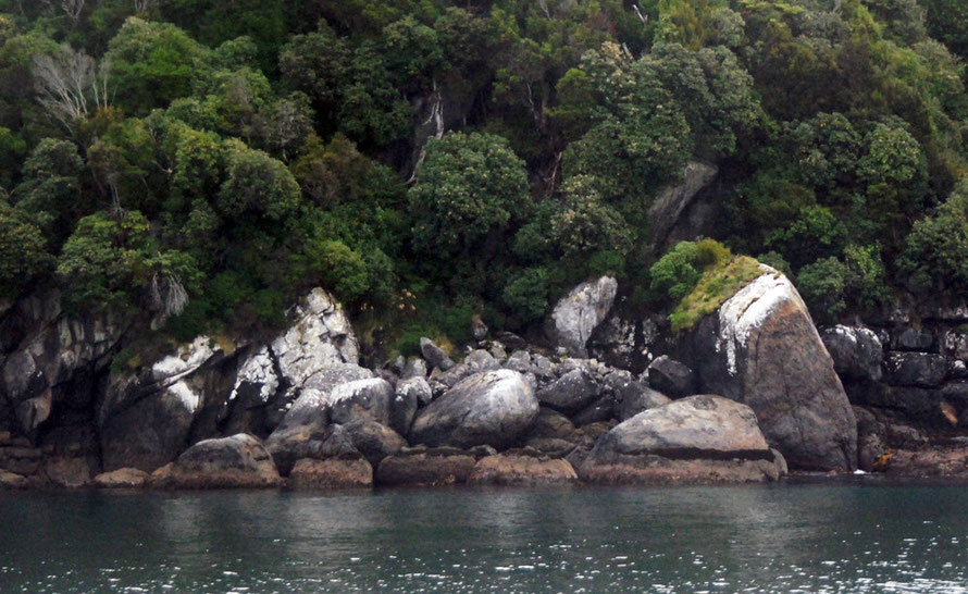 The rocky granite shore of Stewart Island.