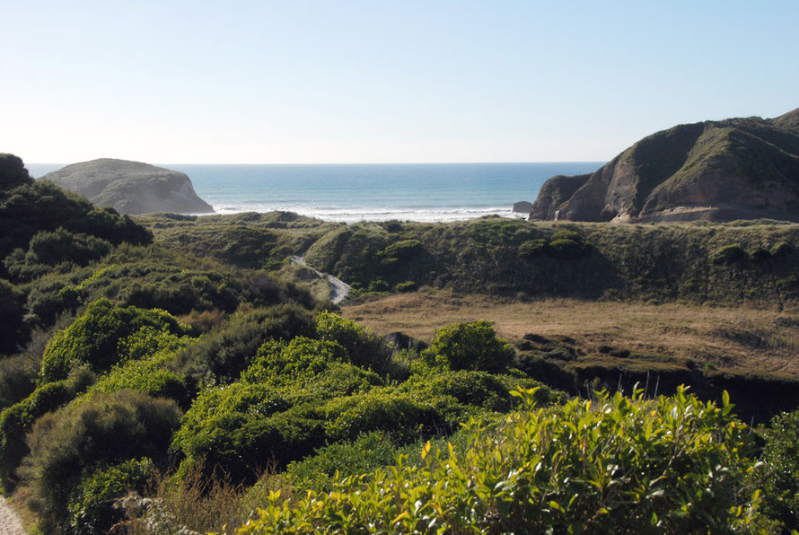The opening vista of Wharariki Beach with dense bush growing in the damp hollows behind the active dune line.
