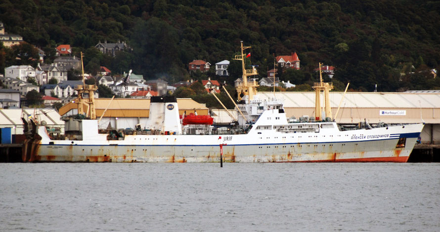 The Professor Mykhaylo Aleksandrov at the wharfside in Dunedin. Crewed by Ukrainians the boat works six month shifts in the Arrow Squid and Jack Mackerel fisheries (see photo link)