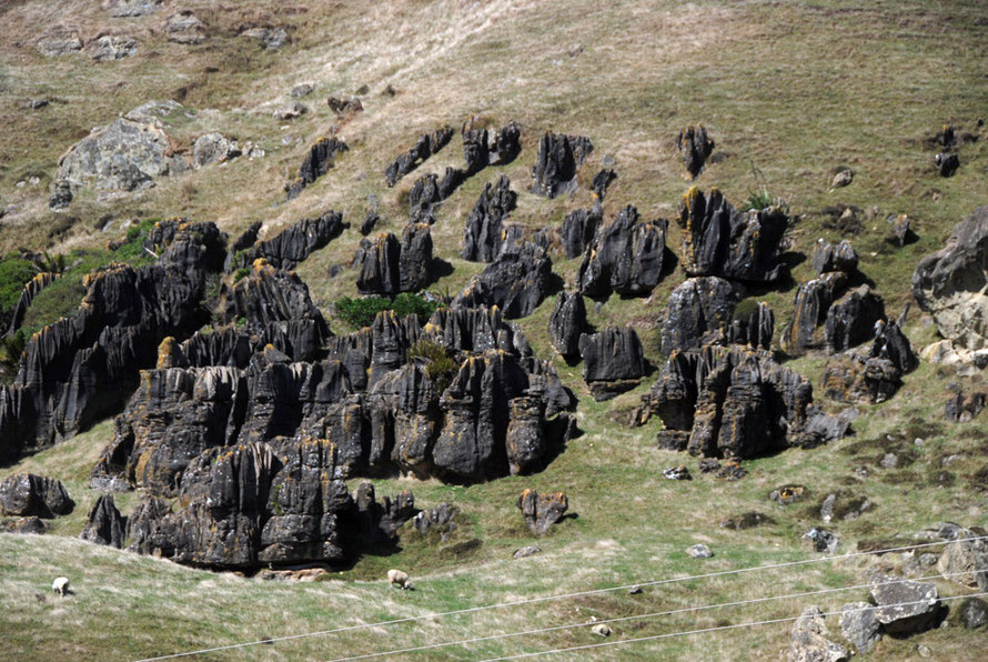 Unmantled karst forms - karren. The overlying soils and interveing rocks anve been dissolved away to leave these sentinels on the steep hillsides alongside the Cowin Road