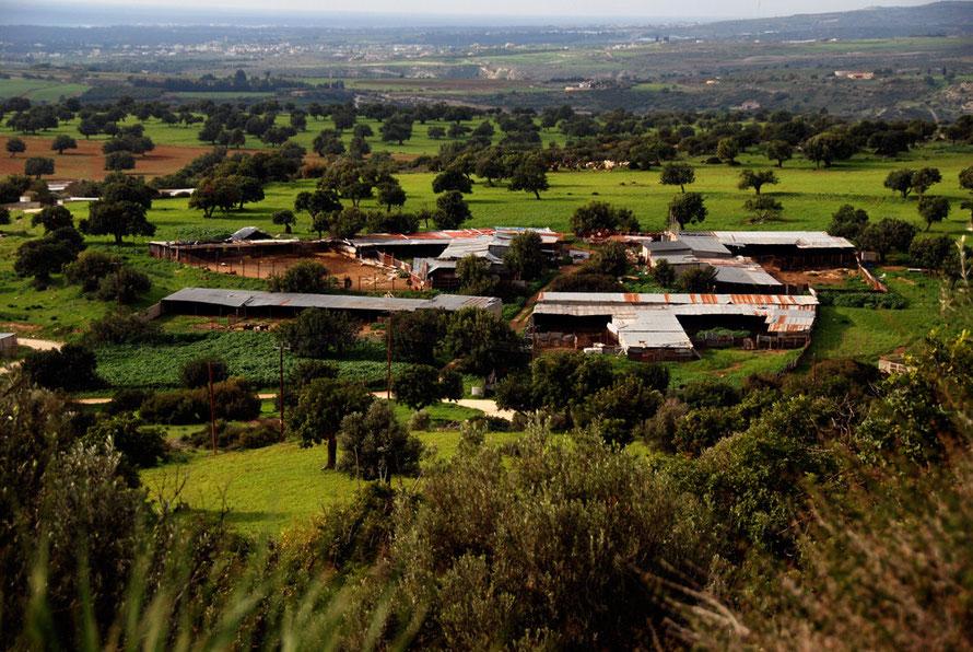 Corrugated-iron farm sheds above Kouklia, Paphos (January 2013).