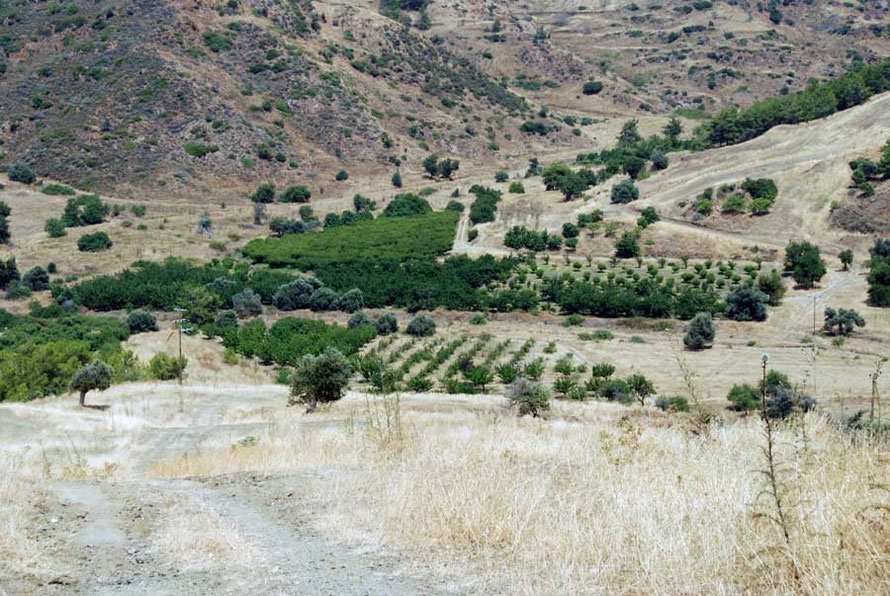 Olive and mandarin trees in a valley bottom by the Kokkina enclave