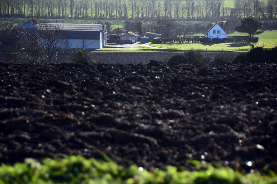 East Kent farm in winter sun. January 14th 2015.