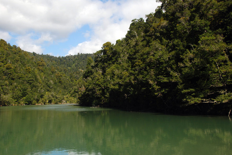 Forest of rimu, kahikatea, pukatea, rata and nikau palm comes right to the water's edge in Whanganui Inlet.